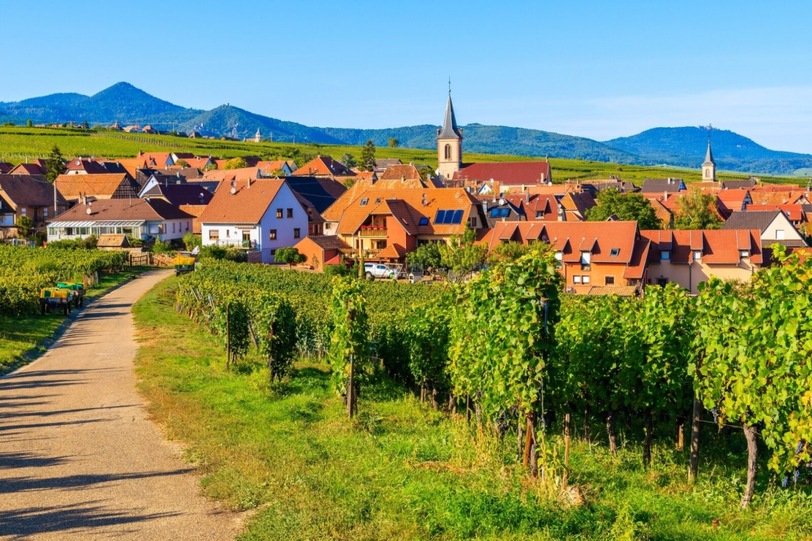- Make the right choice for your first experience in wine tourism - 2021 - 17