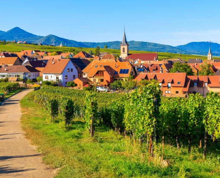 - Make the right choice for your first experience in wine tourism - 2021 - 11