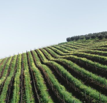 - Choose your wine route: plan your excursion according to your tastes - 2021 - 20
